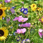 Fleurs et Plantes compagnes